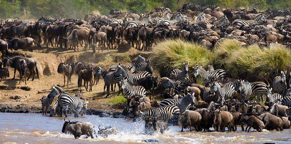 9 Days Mid-Range Lodge Safari Tanzania – Serengeti Great Migration (July –October)