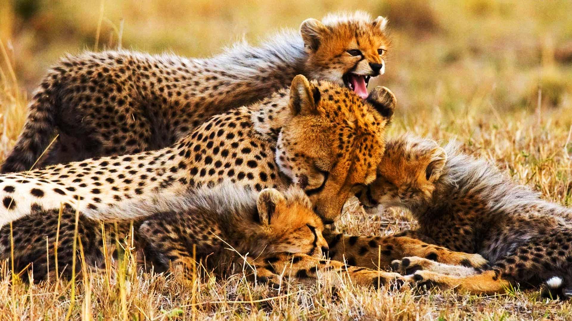 Tanzania Safari Day Trips